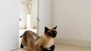 神谷コーポレーション、フルハイトドアにネコ〜大型犬に対応するペットドア