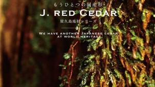 森林資源活性化スキームで屋久島地杉使った建材の代理店を募集
