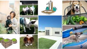 innovation、住宅屋上をドッグランとして活用する新プラン