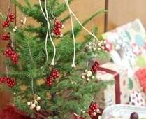 木材・合板博物館、クリスマスツリーとして楽しめる苗木の予約販売を開始
