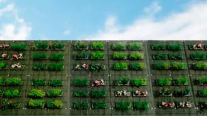 東邦レオ、軽量・薄層・低価格型の壁面緑化システムを開発
