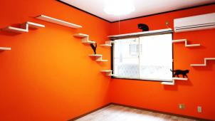 松井産業、「猫専用共生型」として賃貸住宅をリノベーション