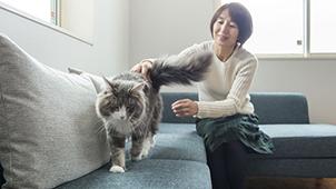 大和ハウス×ベネッセ オープンハウス「猫と暮らすまちなかシーヴォ」公開