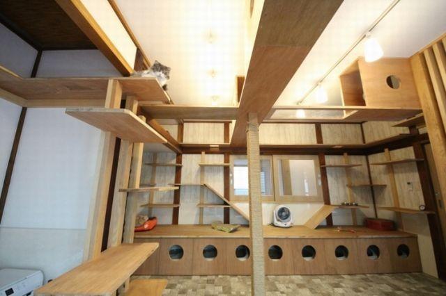一階に設けられたキャットルーム。二階には各部屋6帖ほどの人間の居住スペースが3部屋ある