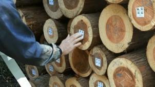 「森を育てる家づくり」 循環型社会に向け工務店、施主とともに学びあう