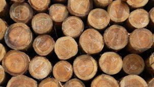 林野庁、非住宅のJAS構造材利用に補助 事業者は登録制