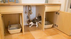 獣医師と共同開発 猫も人間も快適なリノベプラン第一弾初公開