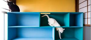 日本ライフスタイル協会、「猫との住まいアドバイザー」資格認定講座を6月に開催