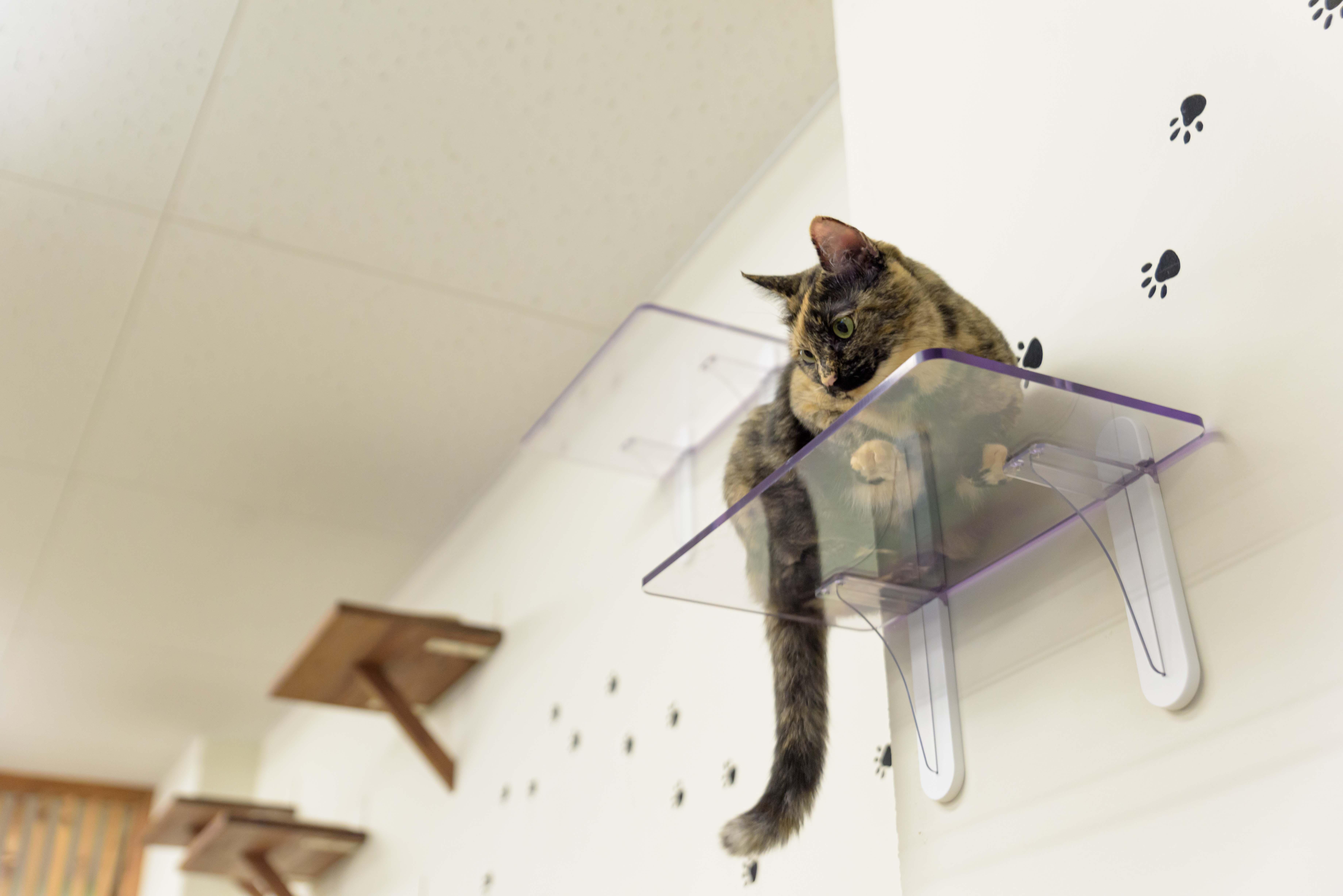 ネコの肉球が見える透明キャットステップを開発