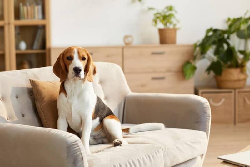 【愛犬と共に暮らす】ペットのためのリノベーション事例と費用を解説
