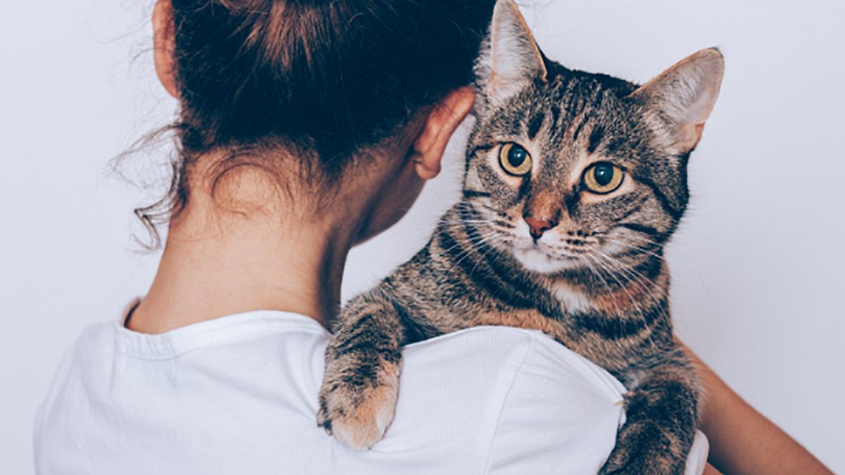 家賃収入が得られる猫付き賃貸併用住宅 シングル女性の不安を解消