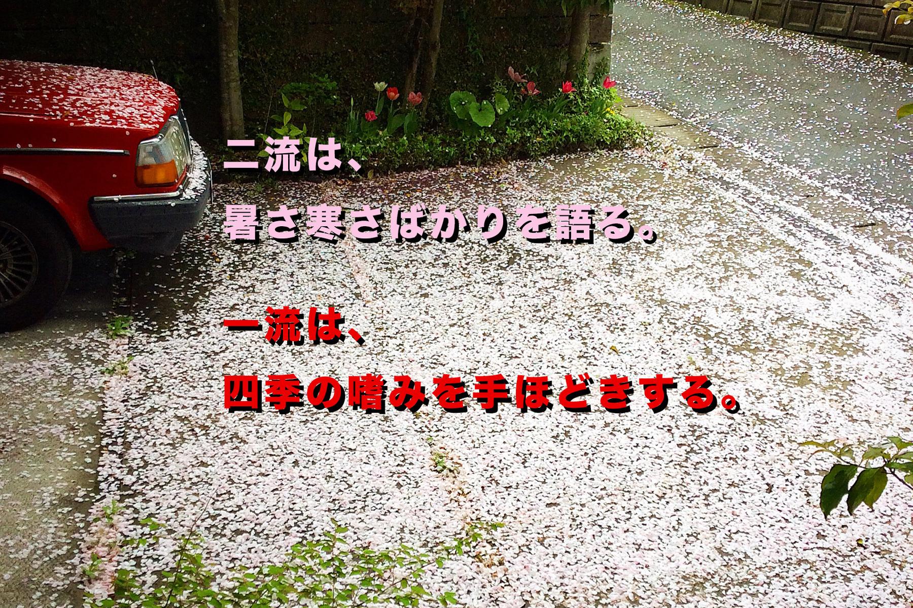 19回目のお花見 その2【続・家づくりの玉手箱】
