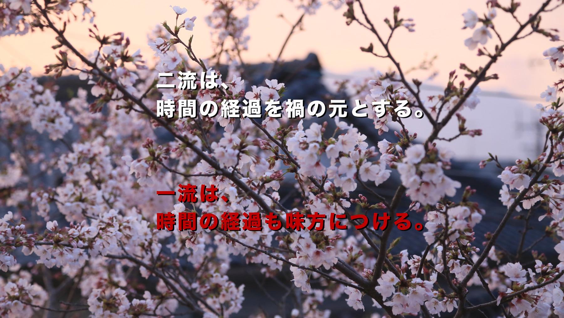 19回目のお花見 その1【続・家づくりの玉手箱】