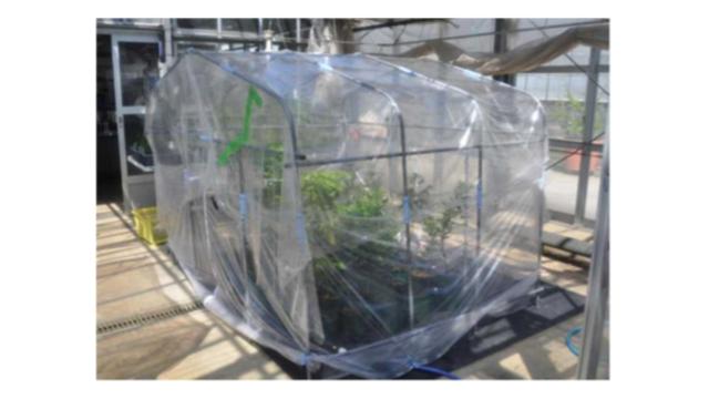 住友林業と神戸大学、樹種別の高温耐性を共同研究